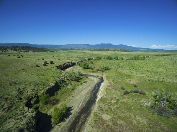 Buffalo Creek Hunting Ranch and Cattle Company